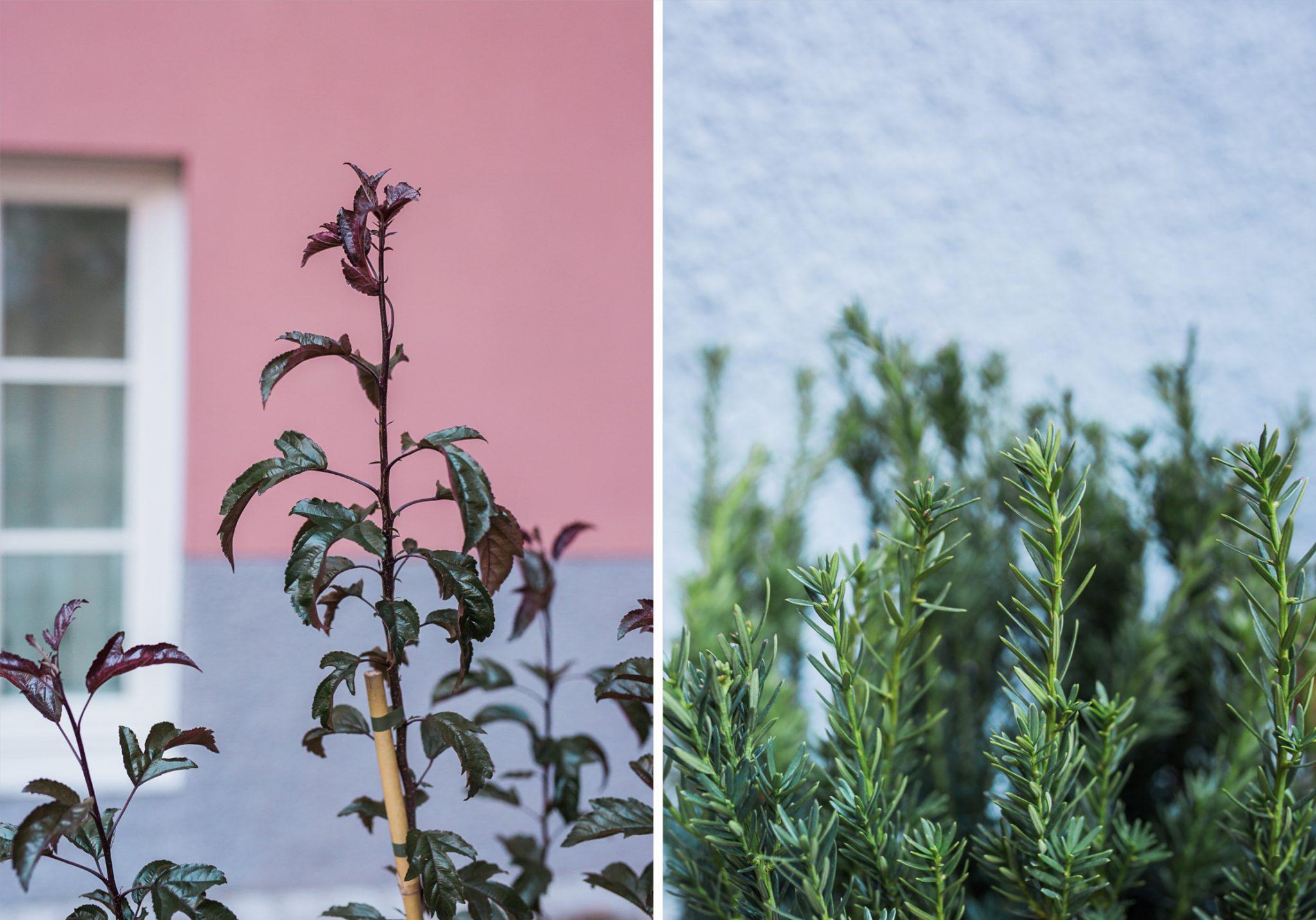 Garden-branding-Stockholm2